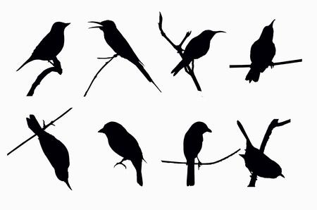 Schatten der kleinen Vögel auf weißem Hintergrund Standard-Bild - 40224428