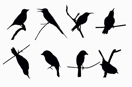 birds silhouette: Shadow of little birds on white background Stock Photo