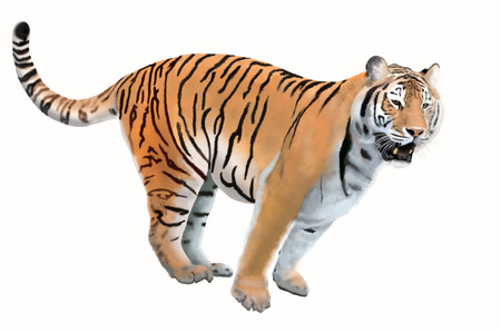 bengal: Smart bengal tiger on white background