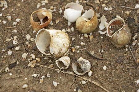 carcass: Karkas van Shell in het droge seizoen