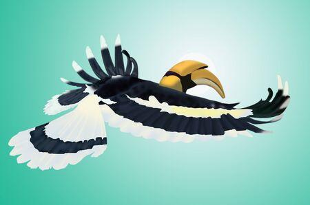 hornbill: Flying big hornbill on gradient background Stock Photo