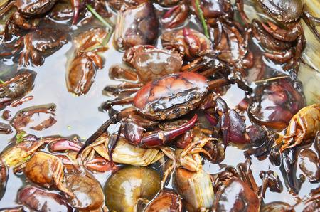 tweak: Group of crabs in the water Stock Photo
