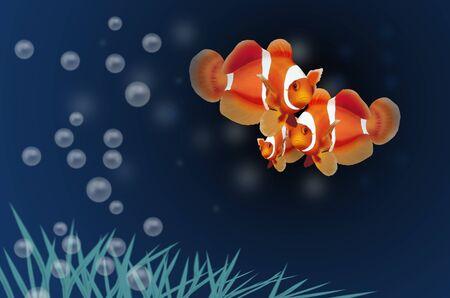 peces payaso: Hermoso pez payaso con burbujas de aire Foto de archivo