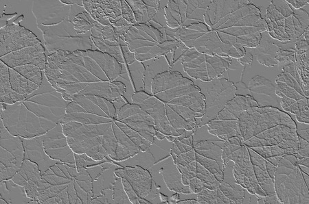 emboss: Emboss  leaf pattern of polyscias