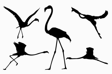 run off: Five actions of flamingo Stock Photo