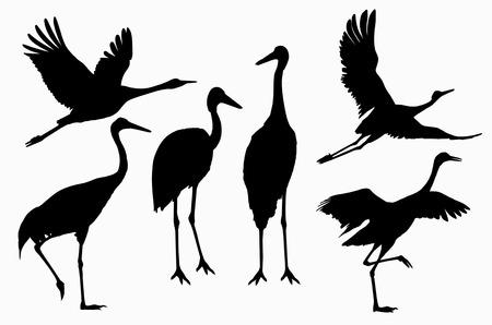 shadows: Six shadows of cranes action