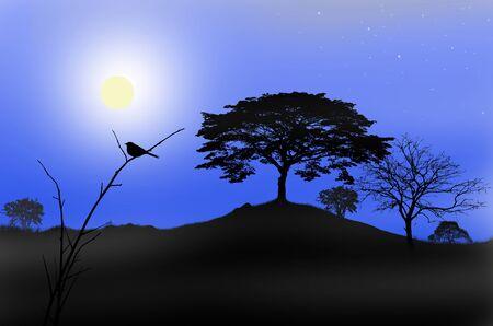 noche y luna: Pájaro solo en la noche de luna llena