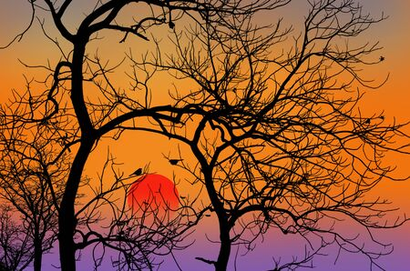 red sun: Red sun in the evening behind black branches