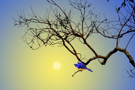 fall trees: Couple blue birds with full moon light Stock Photo