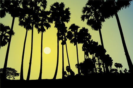 barren: The lonely night in the palm forest