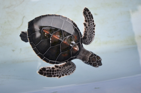poke: Wonderful pattern of sea turtle top view