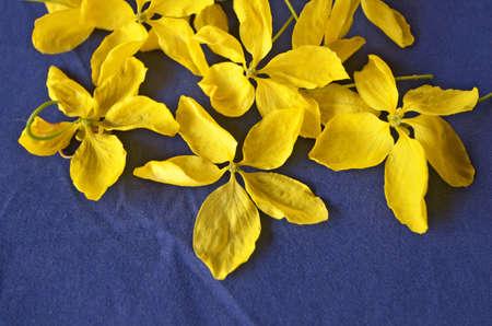 friso: pétalos con lluvia dorada sobre fondo azul friso