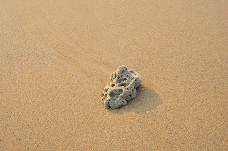 porous: Old porous coral on the sand