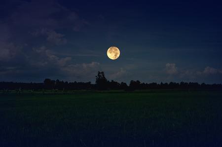 luna piena Glitter sul campo di riso verde