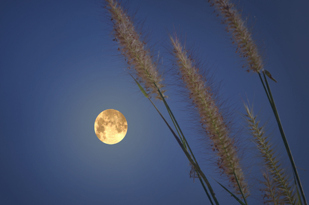 Magic full moon with grass in the evening