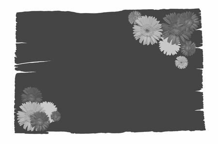 gebera: Black wood board shadow with gebera flowers