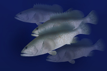 495 Grouper Stock Illustrations Cliparts And Royalty Free Grouper