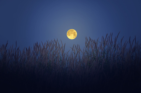 Starlights in the dark waning moon over the grass Stock Photo