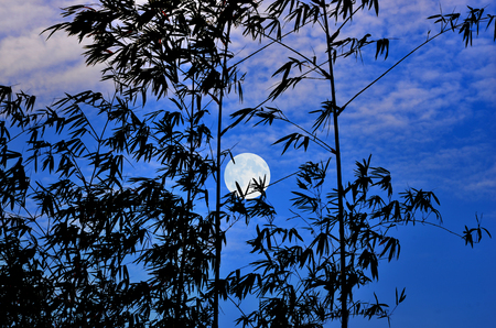 crescent: Full moon and blue sky in early monirng