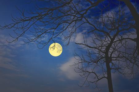 float cotton cloud: Beautiful sky in full moon night