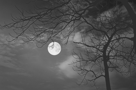 float cotton cloud: Black and white image of lonely full moon night
