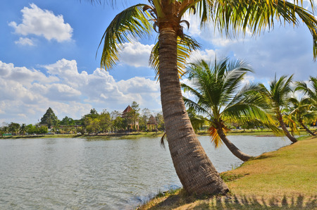 Palm trees beside the pond in the park Stock Photo