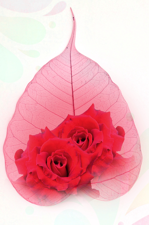 pipal: Red roses and heart vein leaf on white paper