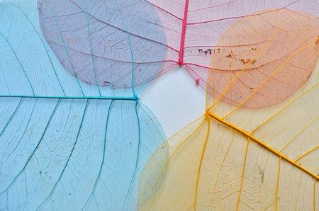 venation: Beautiful colored leaf vein texture