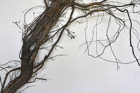 Art of black roots on white background