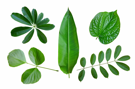 Set of tropical leaf collection on white background