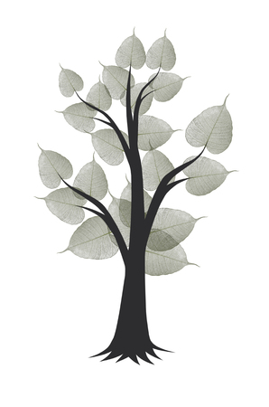 Black bodhi tree with leaves on white background