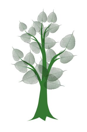 Green bodhi tree on white background