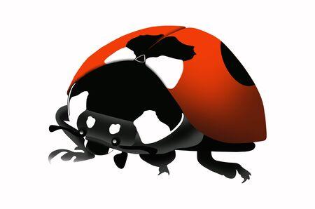 Beautiful ladybug illustration on white background Stock Photo