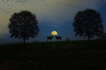 revolve: Couple antelopes with full moon in the evening