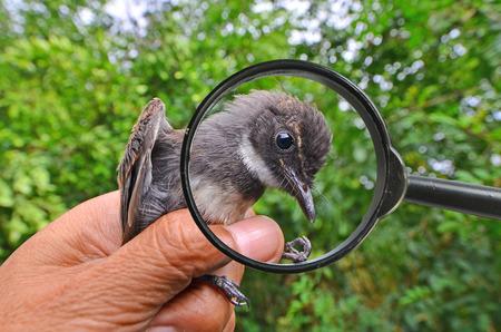 Black bird head in magnifying glass