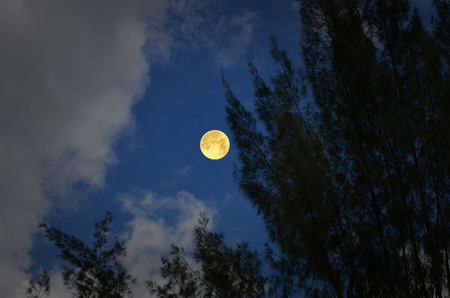Volle maan in blauwe lucht met voorgrond van de pijnboom Stockfoto