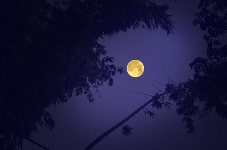Big full moon in blue sky and bamboo bush