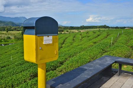 Blue and yellow mailbox in tea farm Stockfoto