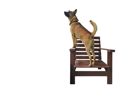 Playful young brown dog on wooden chair