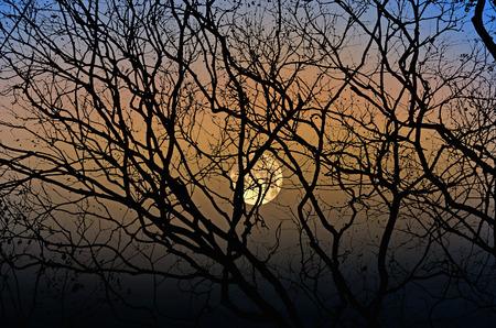 Beautiful big full moon in the winter evening