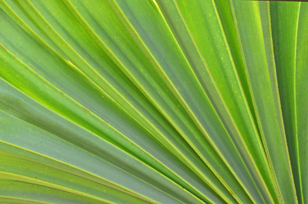 Fresh and bright green leaf pattern texture close up