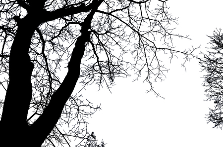 Beautiful art of black branches of bared tree on white background