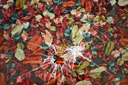 Beautiful dried colored fruits and leaves under broken glass