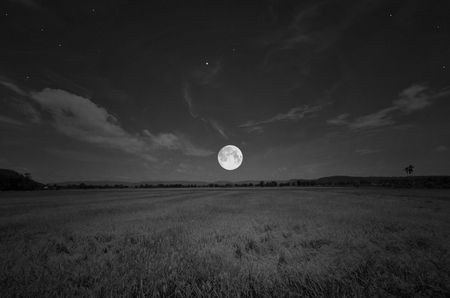 Black and white image of full moon and rice field in the evening