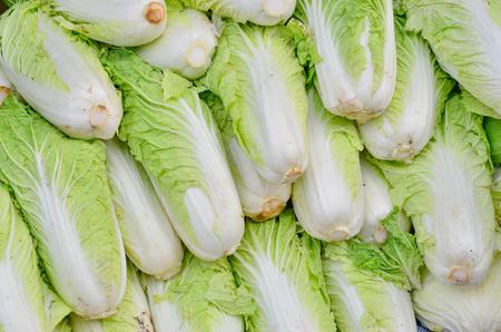 White lettuce heap for sale in the market Zdjęcie Seryjne