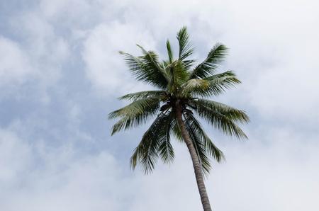 Hojas verdes de palm top y cielo nublado Foto de archivo