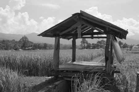 Old image of hut in rice field in Thailand