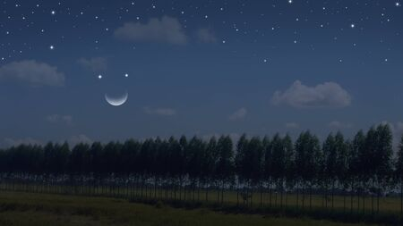 Row of tree in the field of crescent night