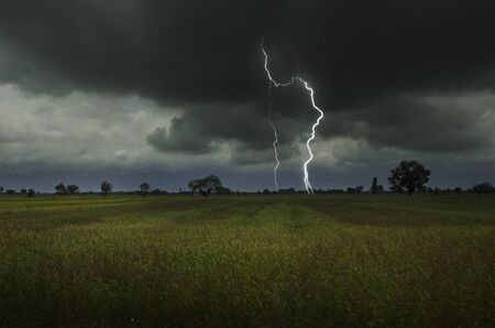 Strong lightning in harvesting rice field