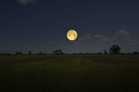 Bright full moon in blue sky over gold field Banco de Imagens